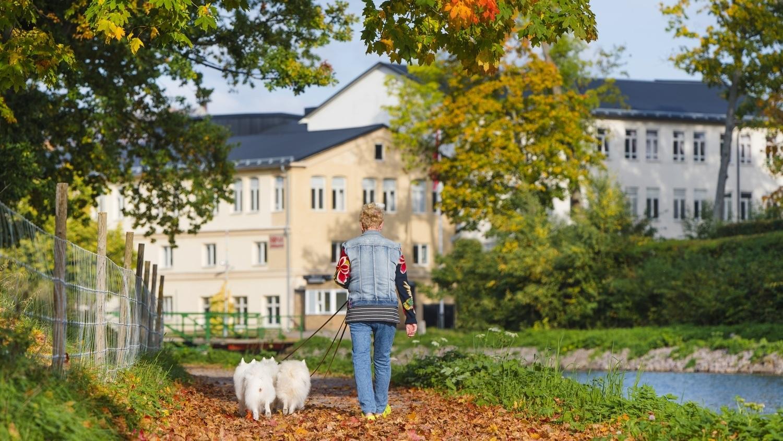Kvinna promenerar med hud längs kanalbanken en höstdag