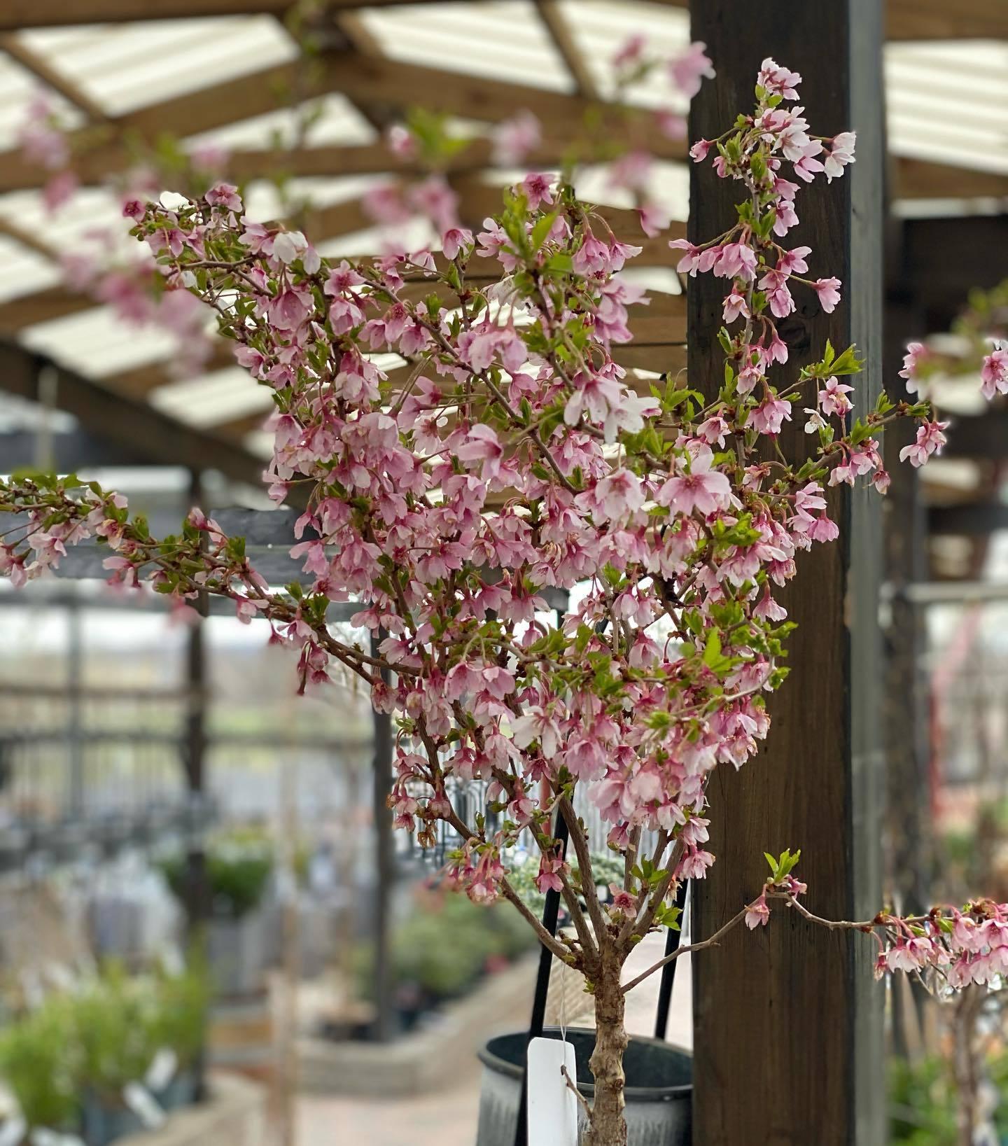 En träd med små rosa blommor