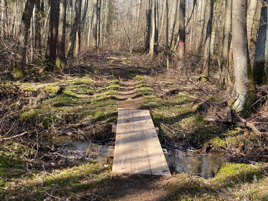 Liten träbro över en bäck i skogen.
