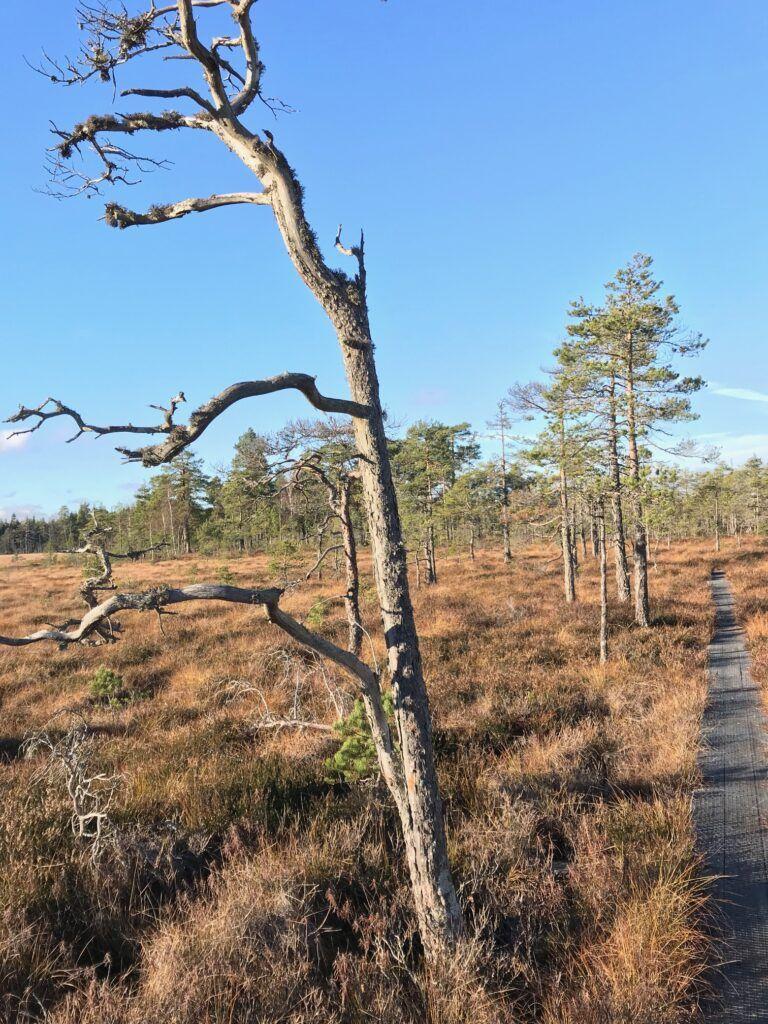 Skogsområde