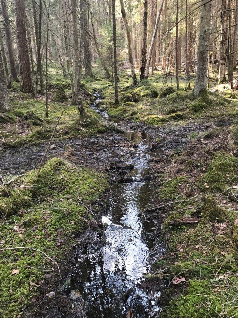 Rinnande bäck i en tät skog
