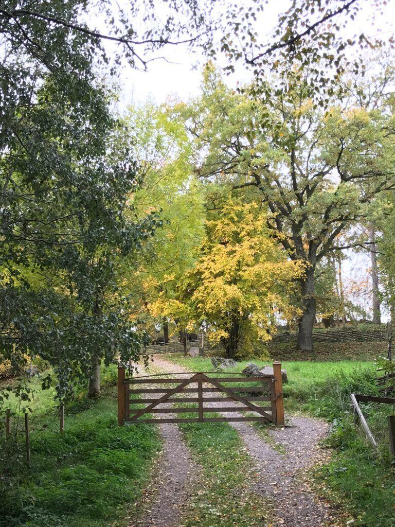 Grusväg med en stängd trädgrind omgiven av lövträd.