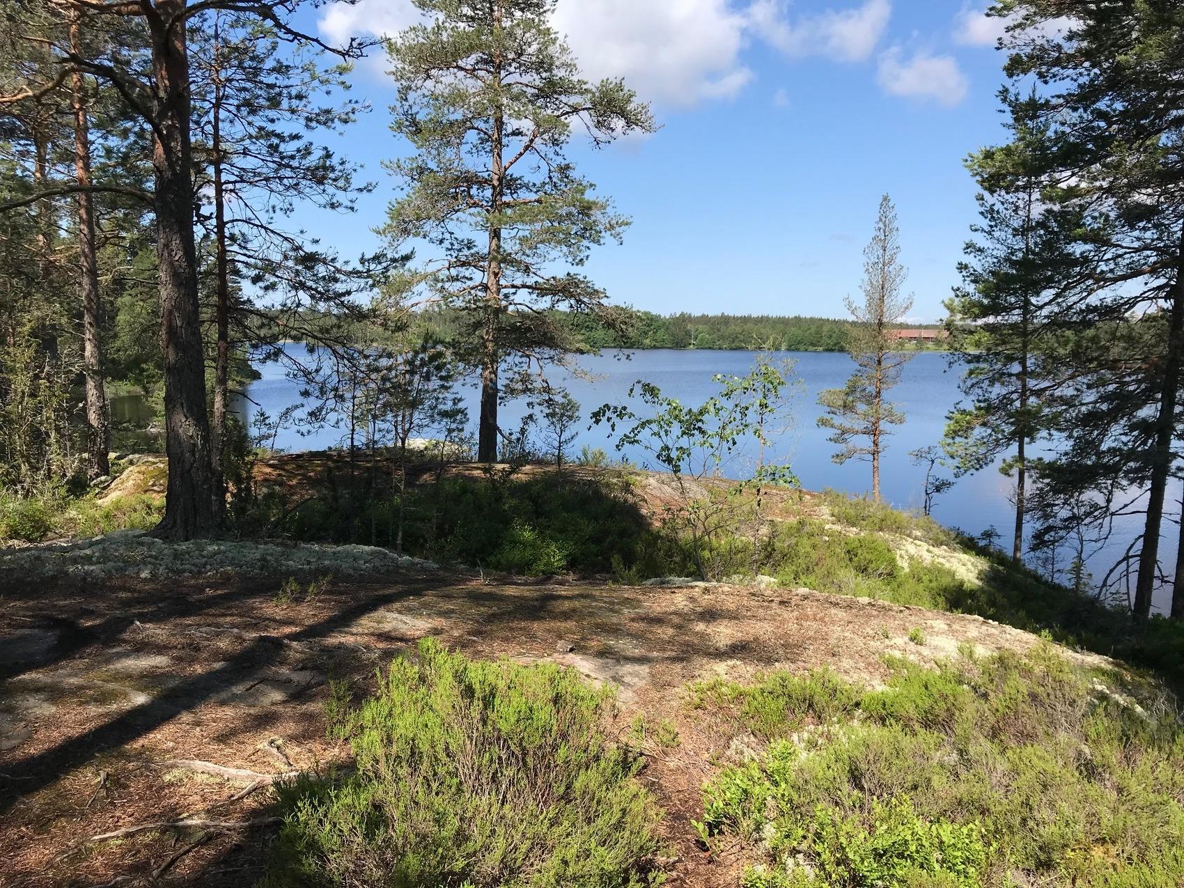 Solig klippa med skog och vatten.