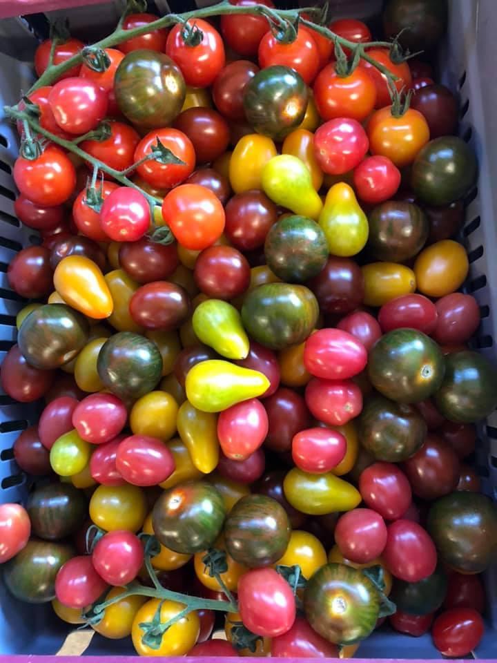 Tomater i olika färger