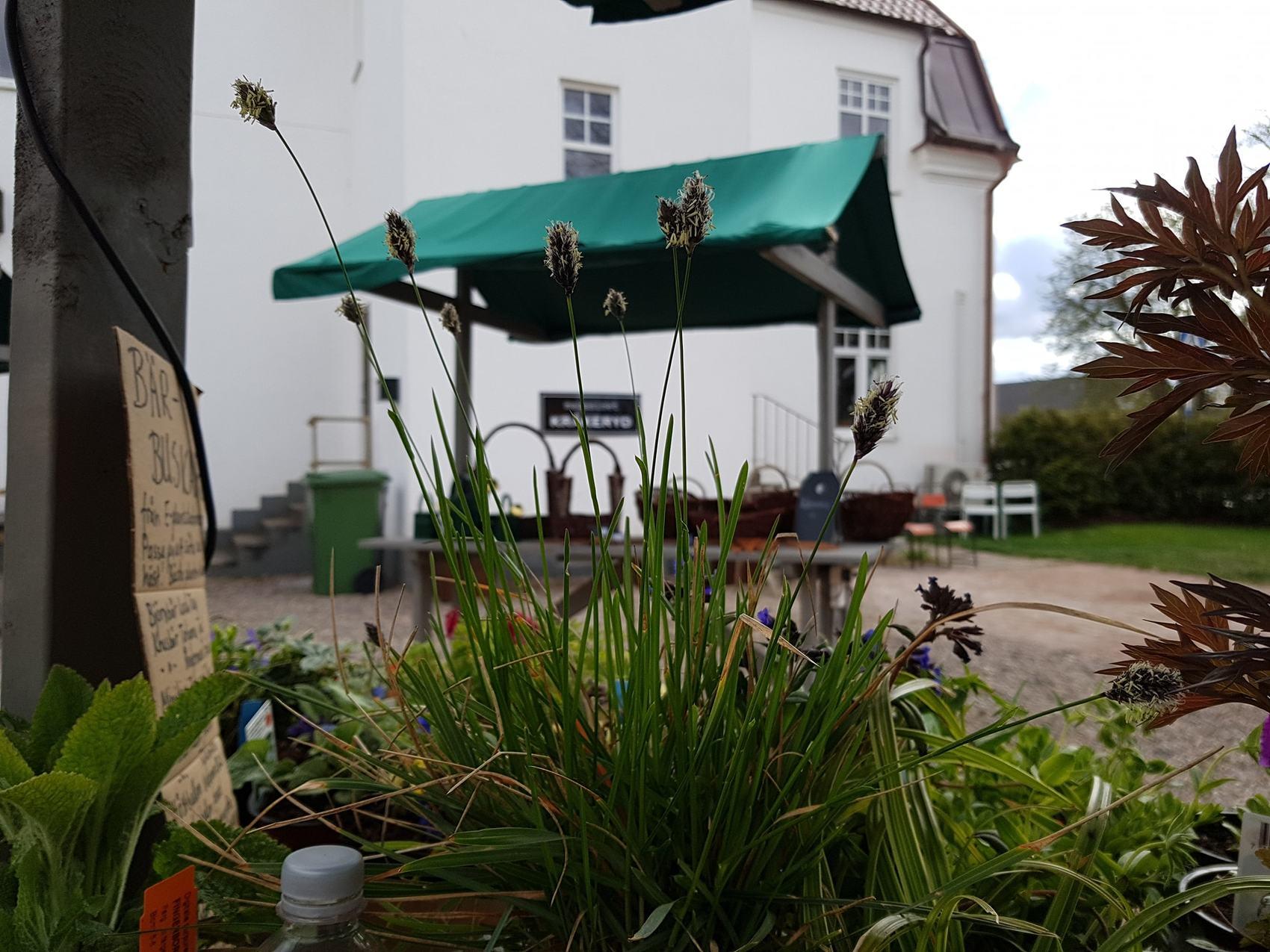 olika gröna växter framför ett litet marknadsstånd som står placerat utanför ett vitt hus