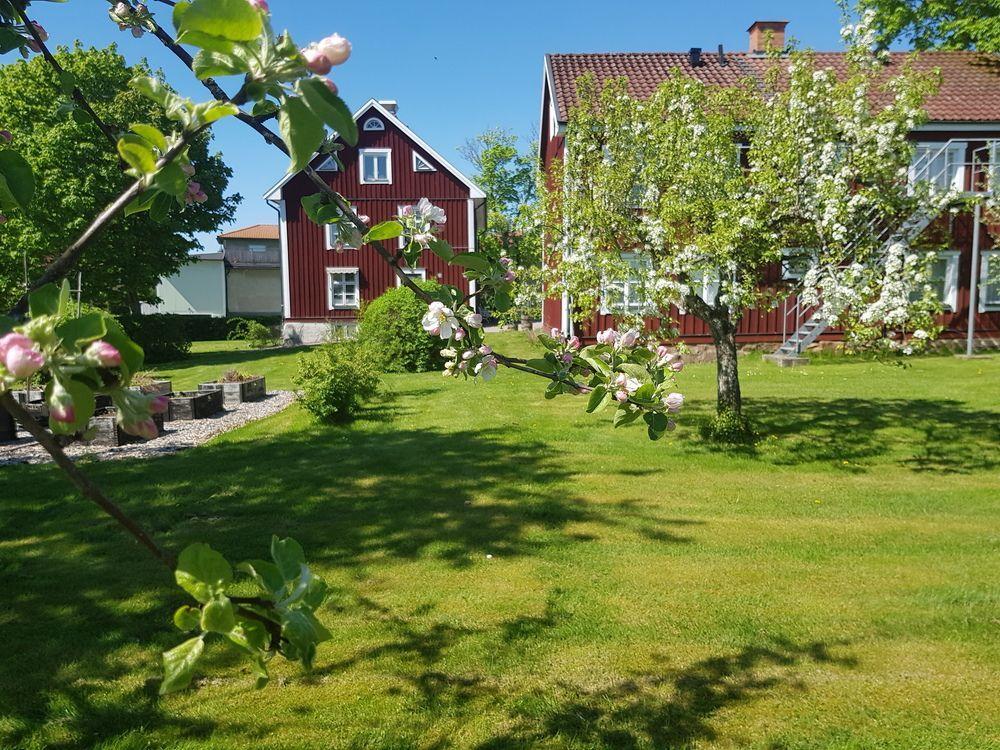 I förgrunden ett blommande äppelträd, i bakgrunden två rödvita byggnader i fint skick.