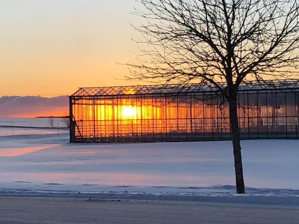 Växthus på vintern i solnedgång