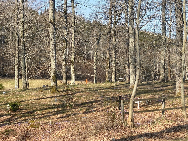 Djurkyrkogård i skog. Små kors är utspridda mellan träden.