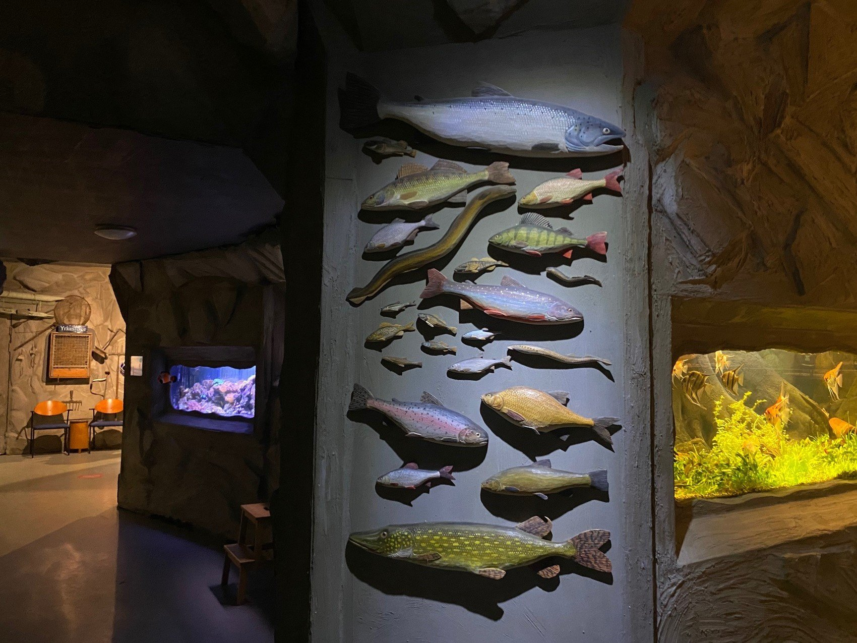 Skulpterade fiskar uppsatta på vägg