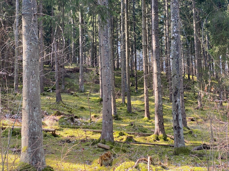 Grön solig backe i skog