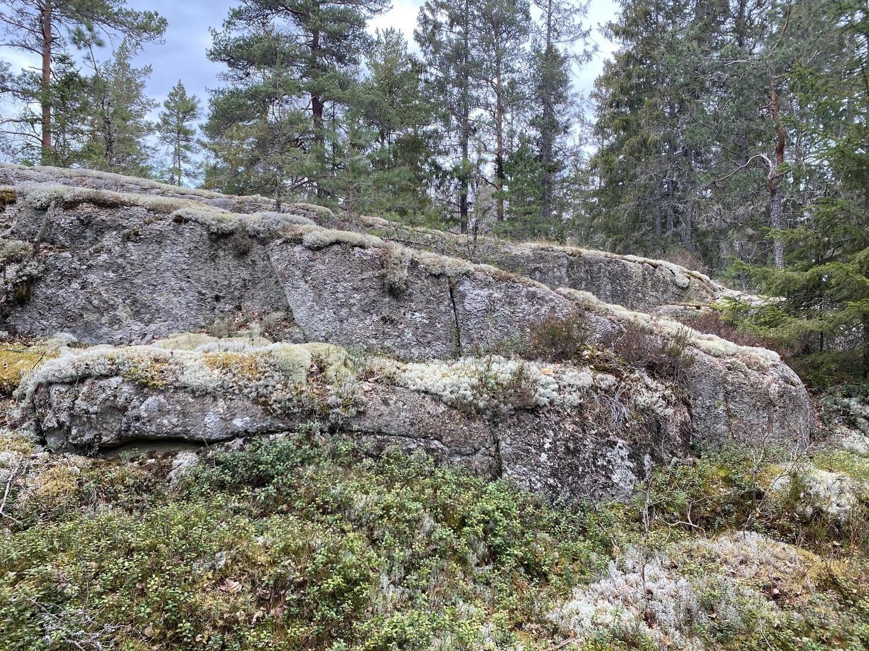 Mossbeklätt litet berg i skogen
