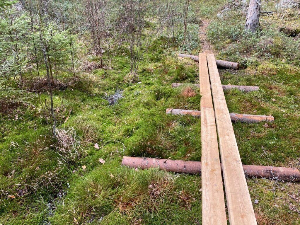 Spång genom grön skog med mossa