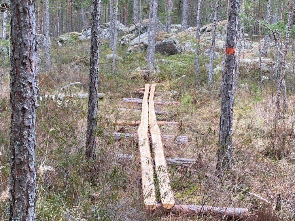 Spång som leder genom skogsparti