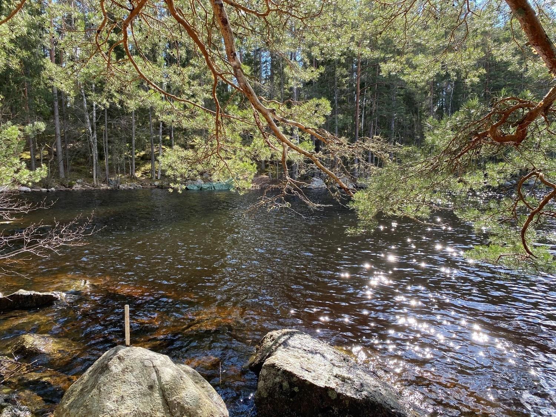 Glittrande vatten i skogsjö