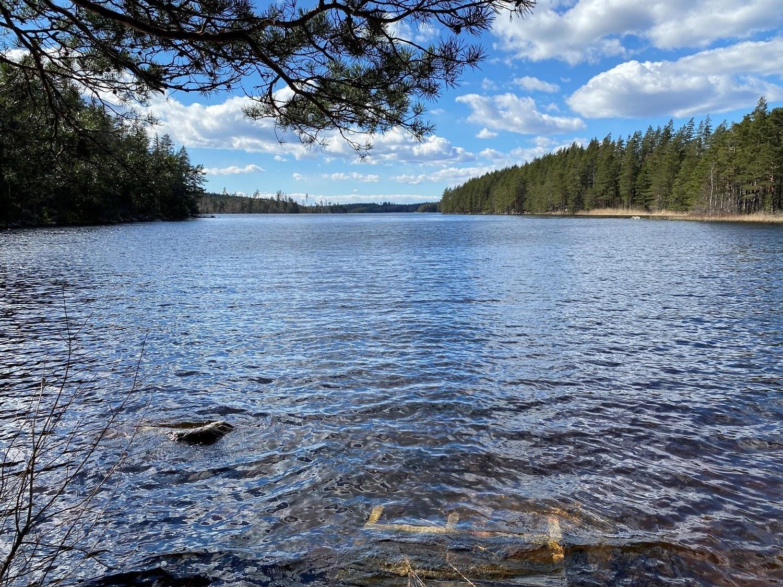 Liten sjö omgiven av skog.