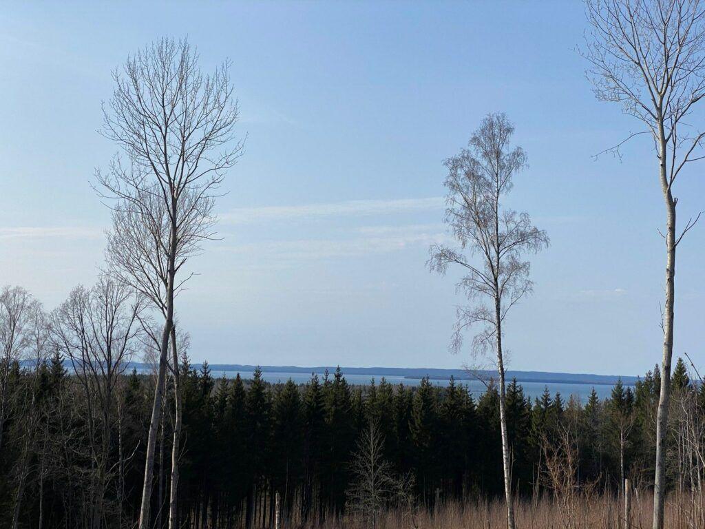 Foto från höjd som visar skog och Vättern borta vid horisonten