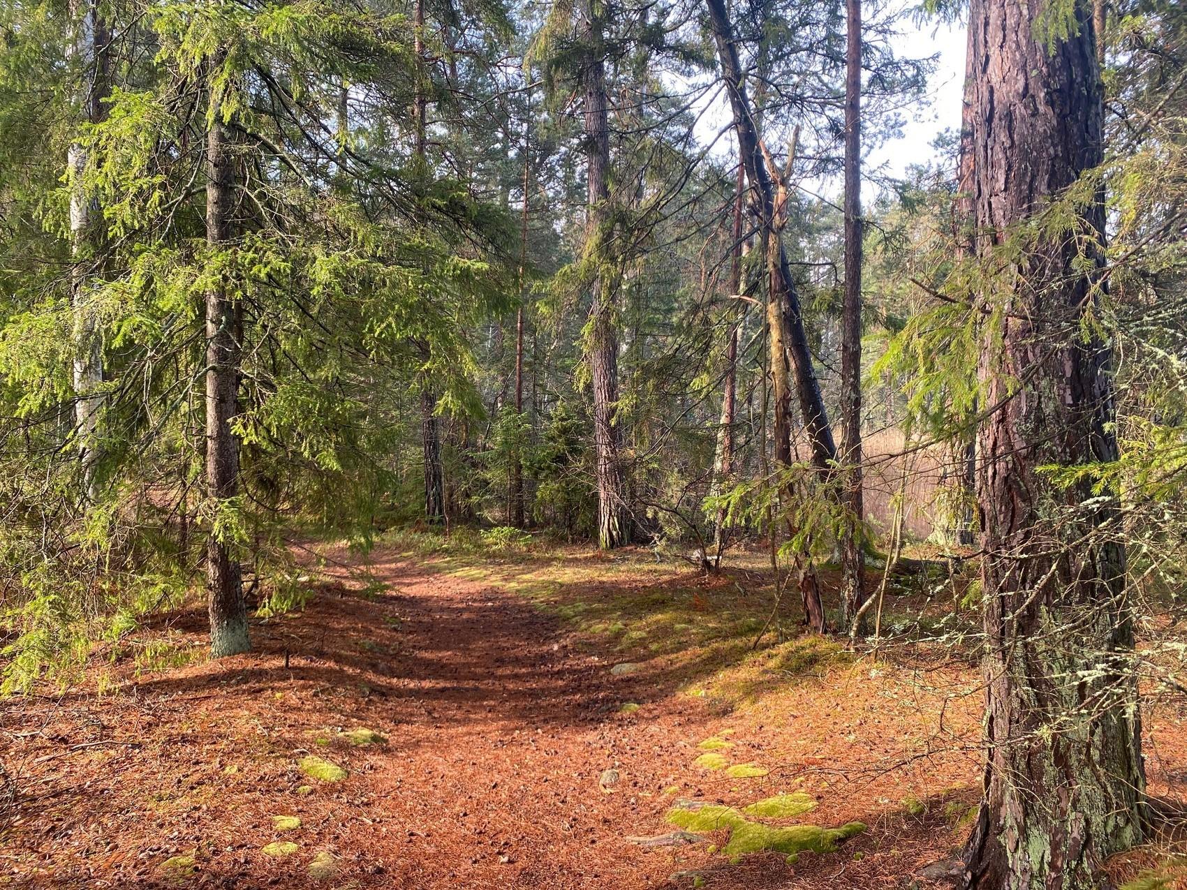 Stig genom skogen