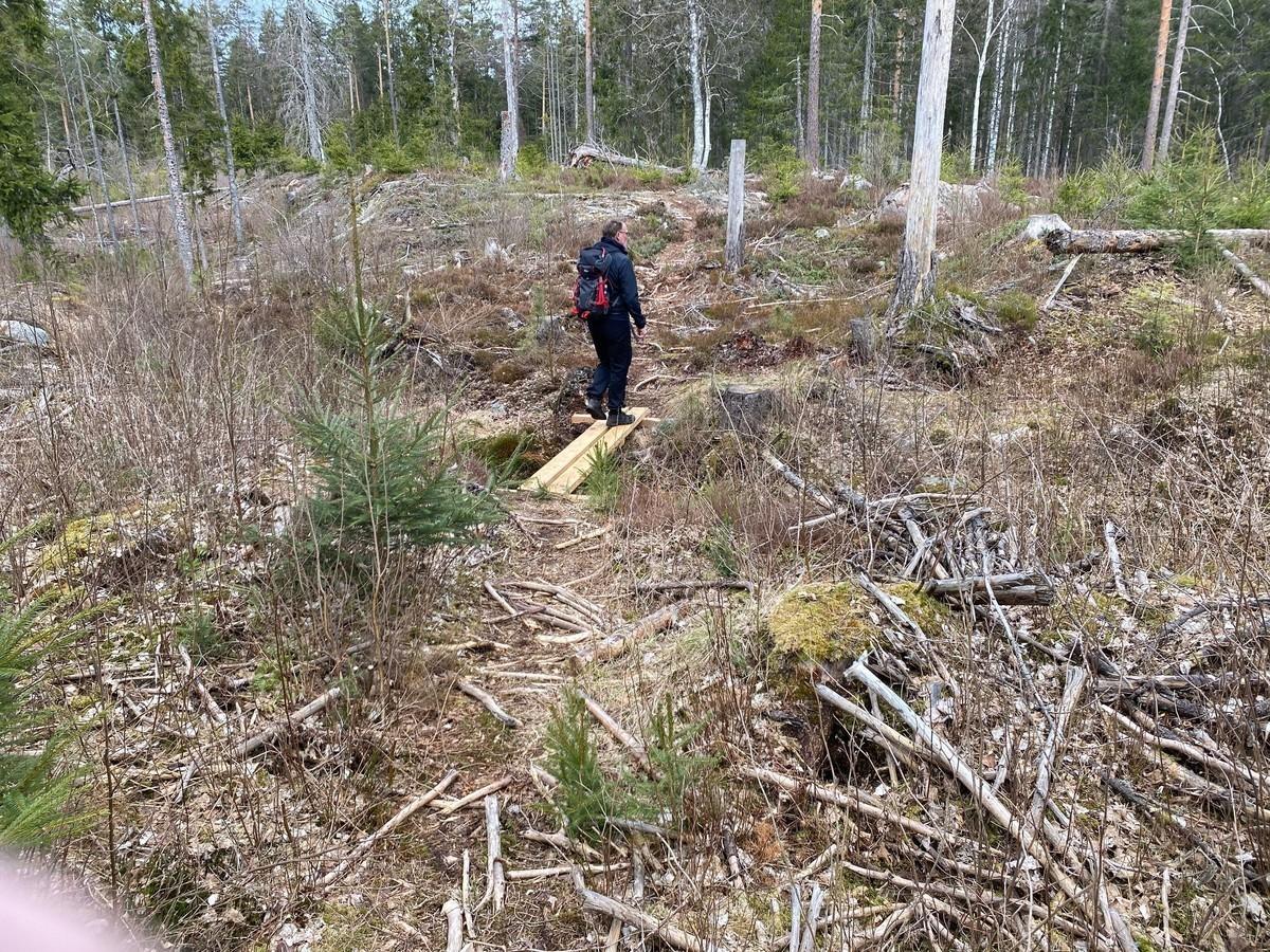 Person står i skogsområde med död skog och sly