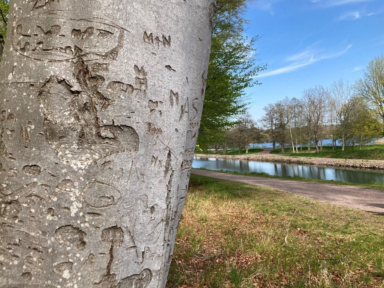 Bokträd med inristade bokstäver.