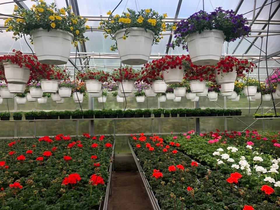 Blommor i vita krukor som hänger i ett tak