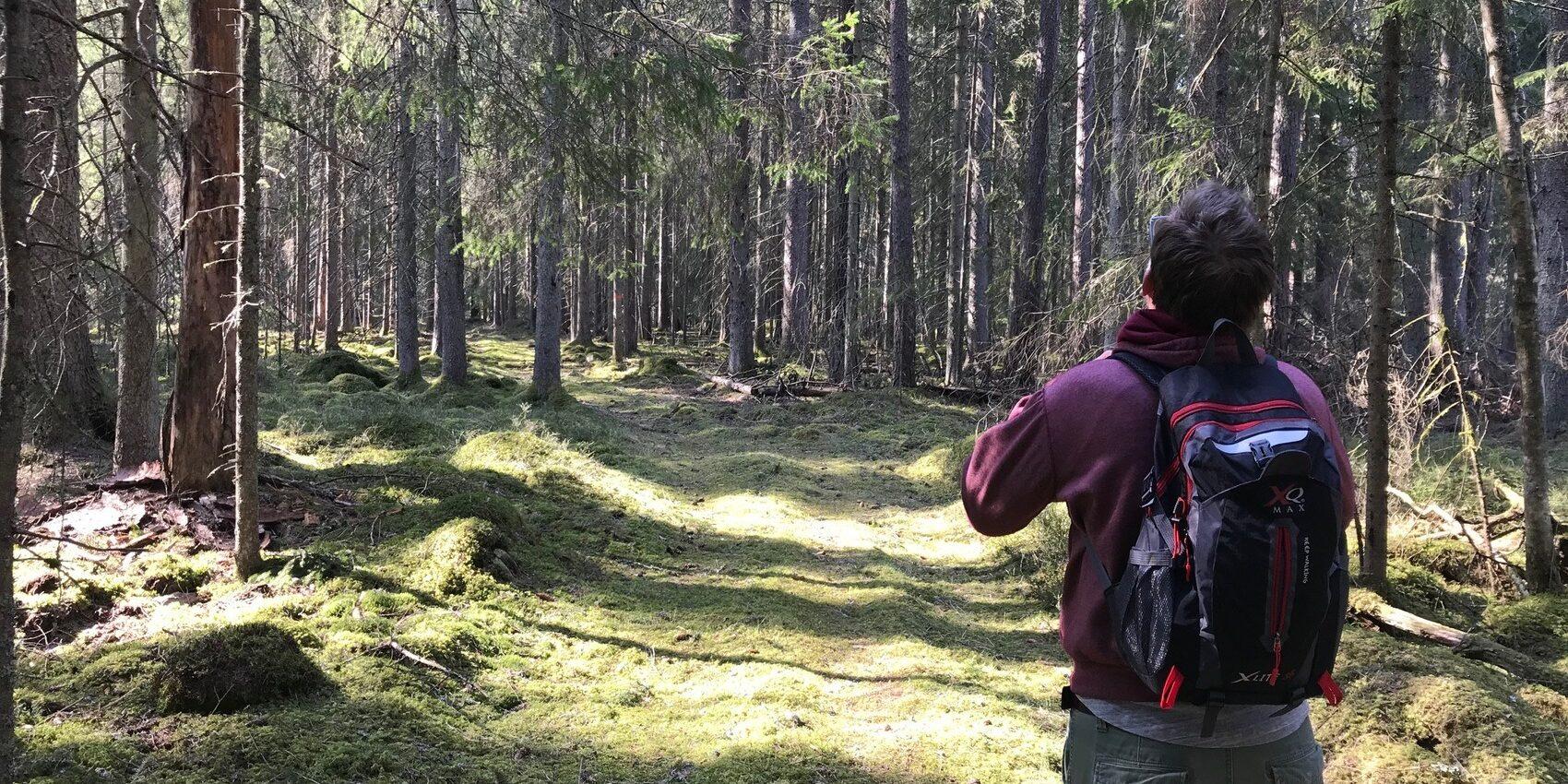 Solig skog stig med människa